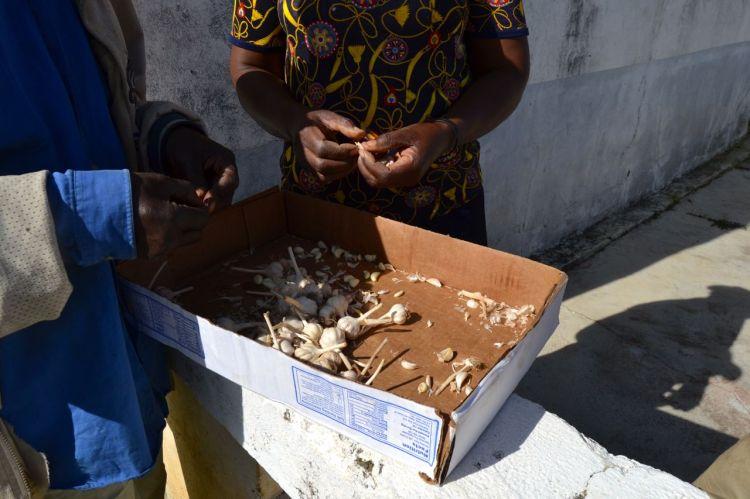 Pelando ajos en wongo