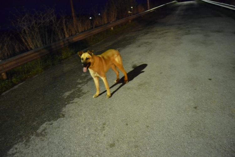 El perro, otra vez