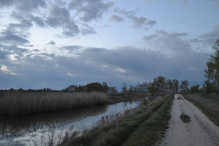El camino junto al Canal de Castilla