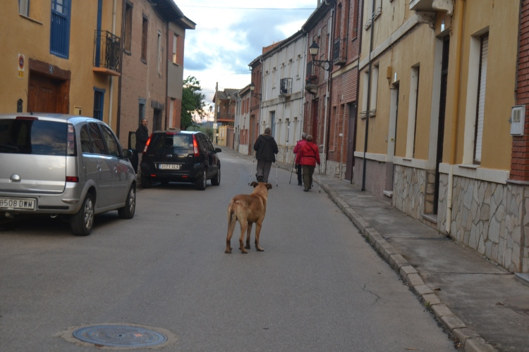 El perro delante de mi en una calle de Hospital de Örbigo