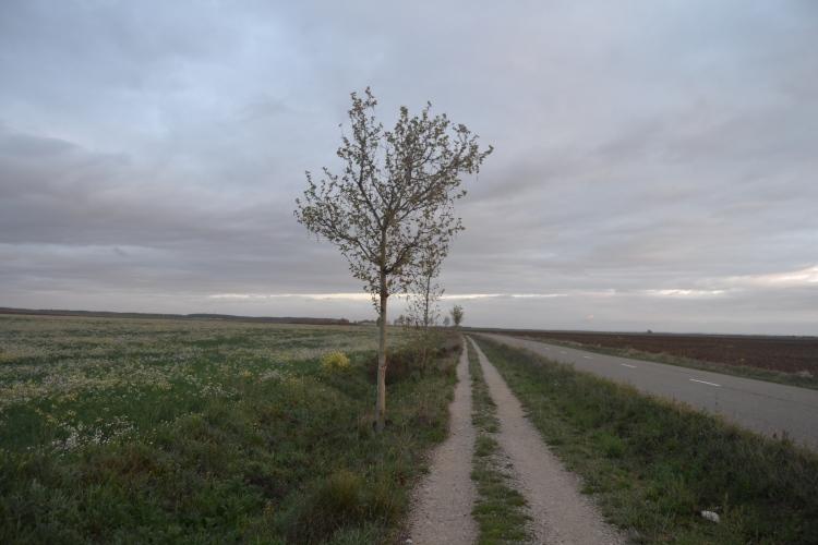 El andadero, el camino junto a la carretera.