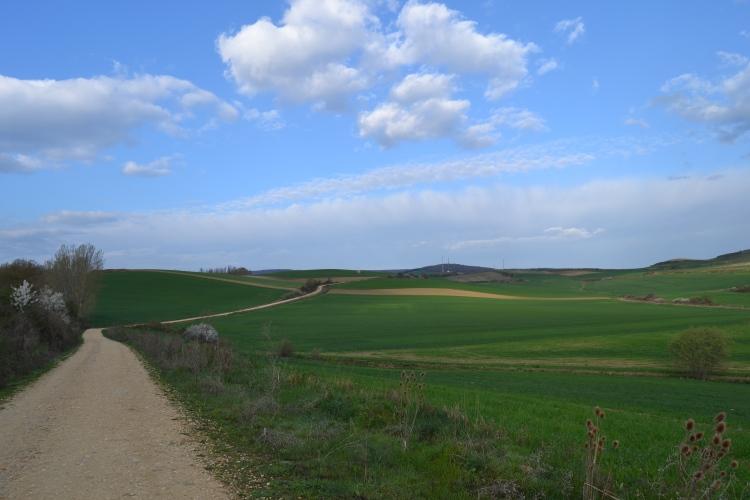 Camino de Villafranca Montes de Oca