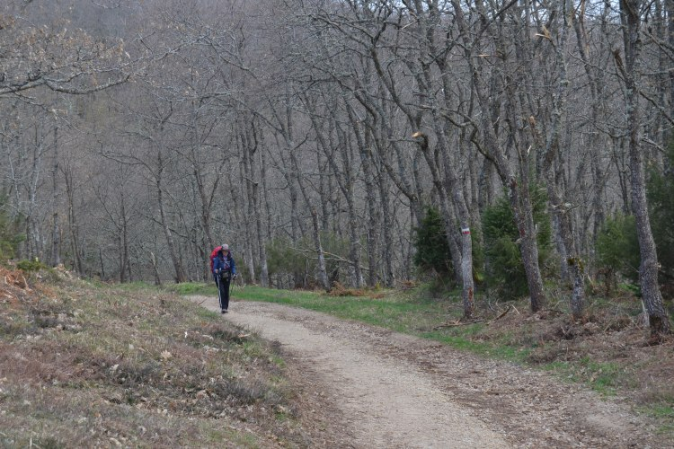 El Camino en los Montes de Oca