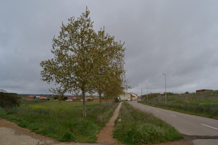 Camino de Mansilla de Mulas