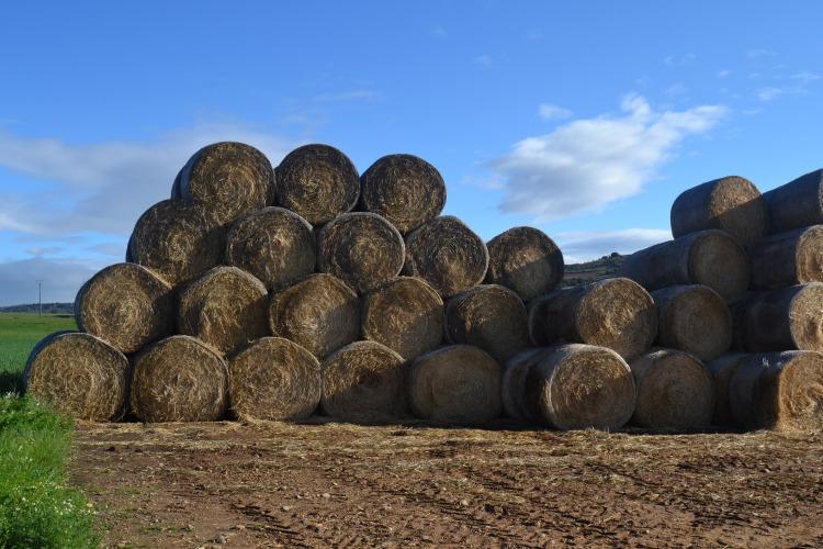 Rollos de paja en una granja de Santibáñez de Valdeiglesias