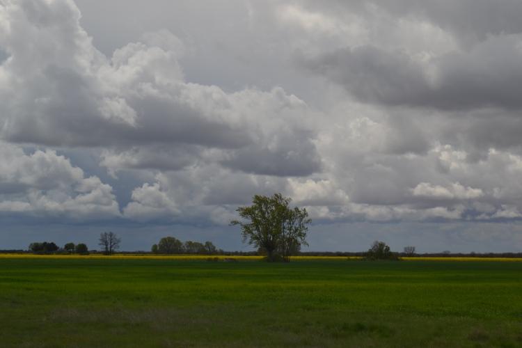 Camino de Villar de Mazarife