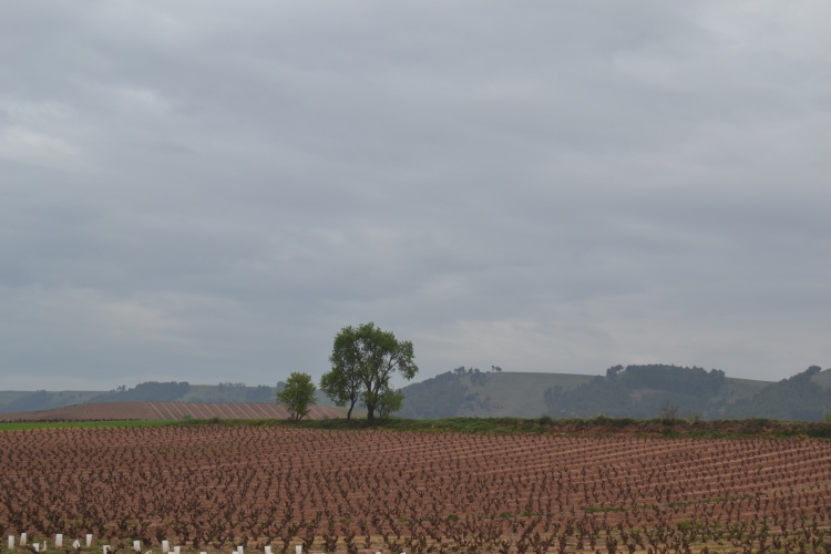 Camino de Cirueña