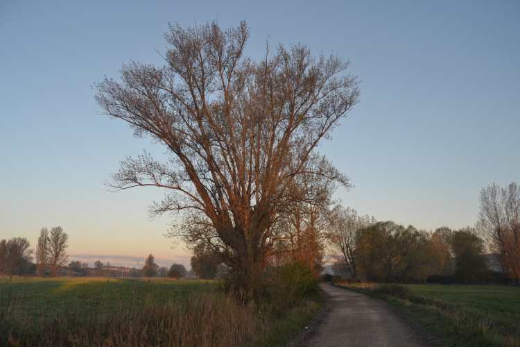 Con el primer sol a la salida de Burgos