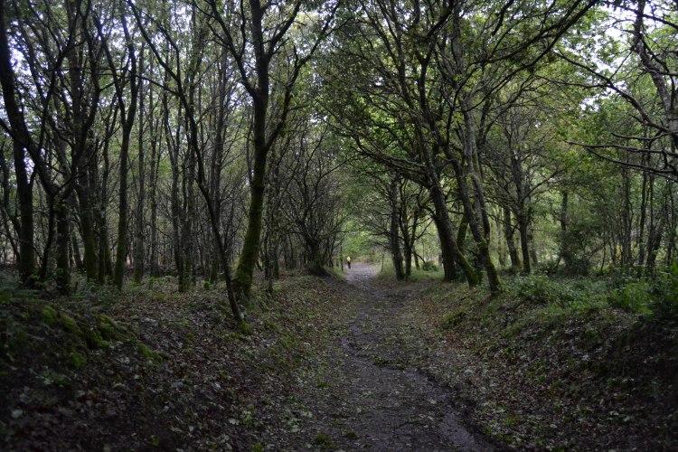 Camino de Arzua