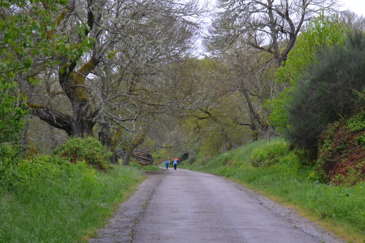 Camino de La Portela