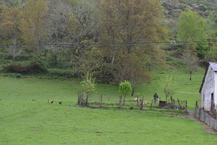 Camino de Cega de Valcarce
