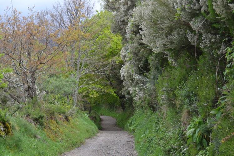 El Camino de Fonfría a Triacastela