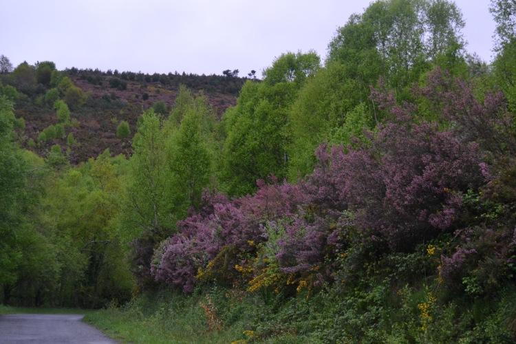 Camino de Sarria por San Xil