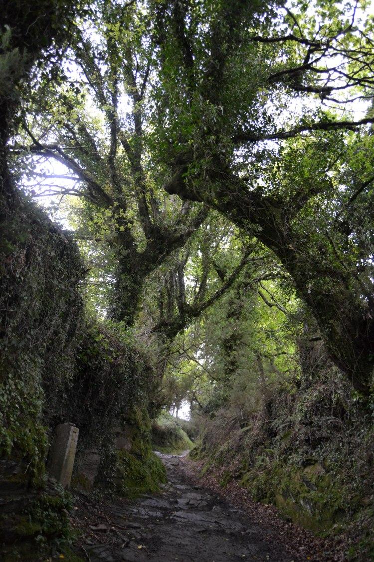 Camino de Sarria