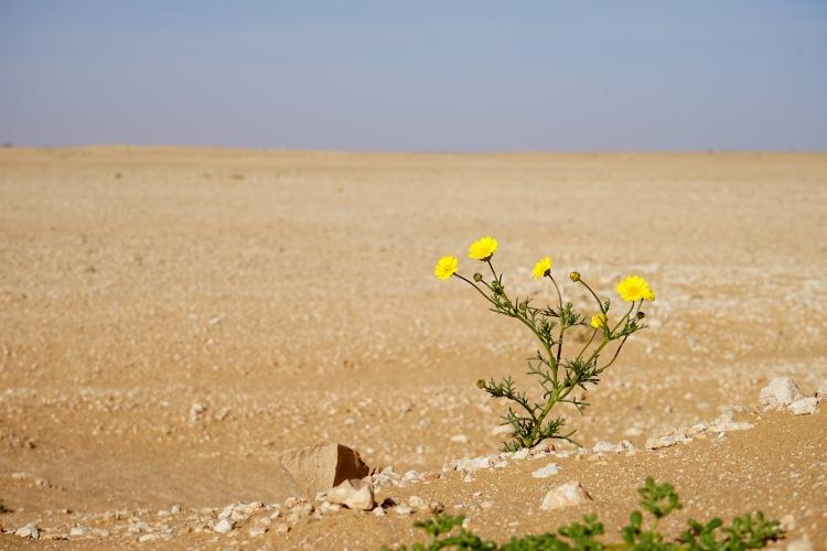 Flores del desierto