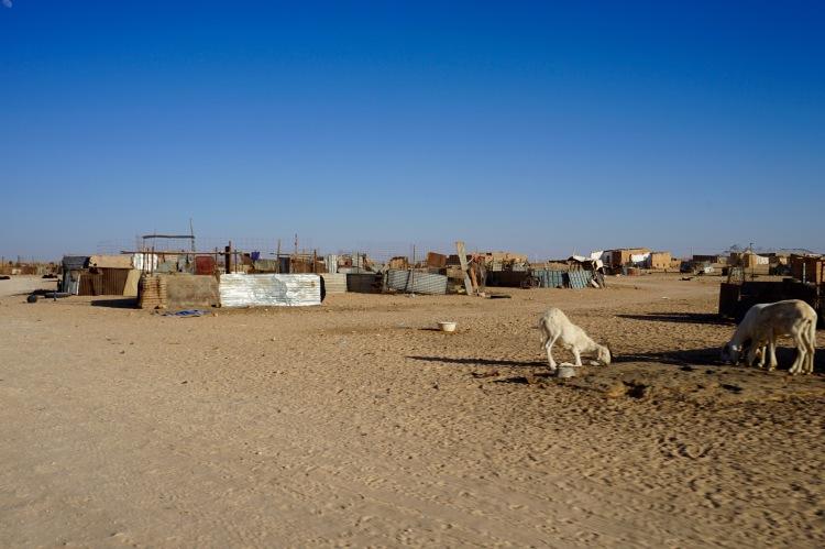 Las cabras en Smara